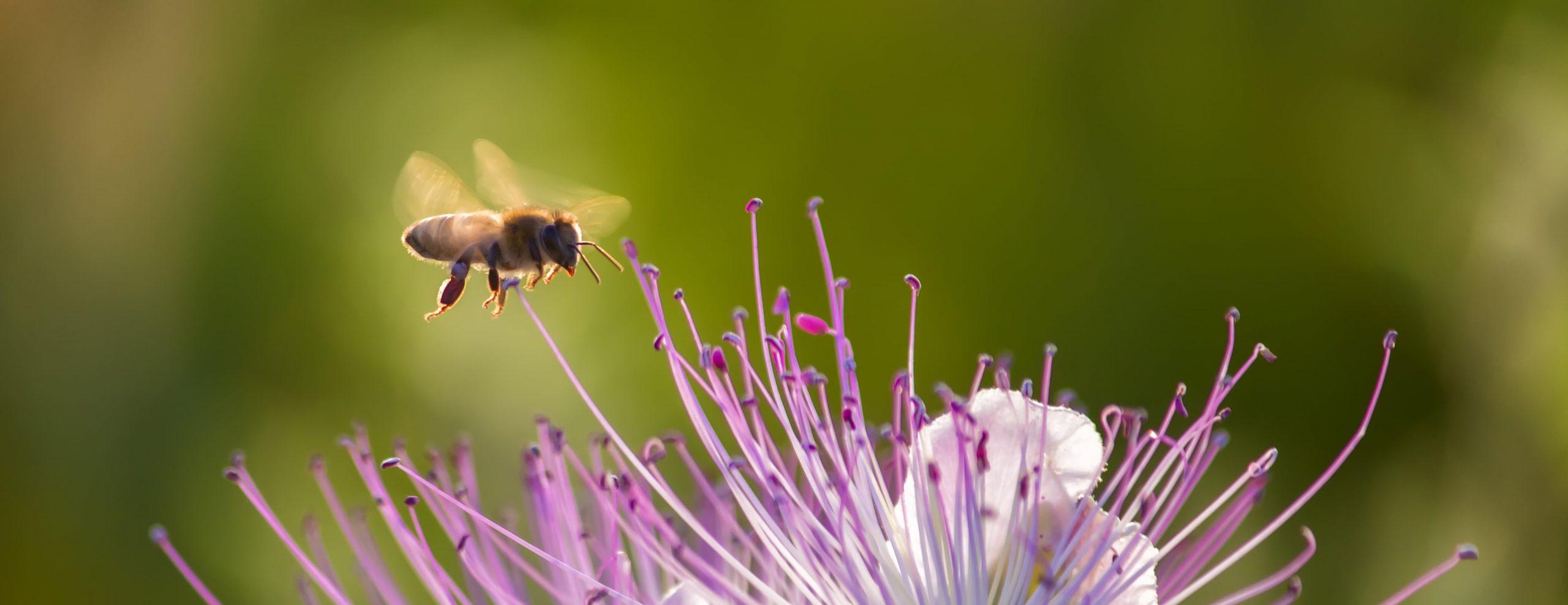 Bees Needs